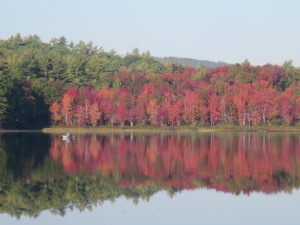 11 fall trees (1)